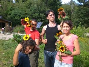 Four SOL Flowers