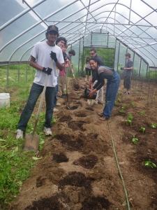 SOL Garden - Planting