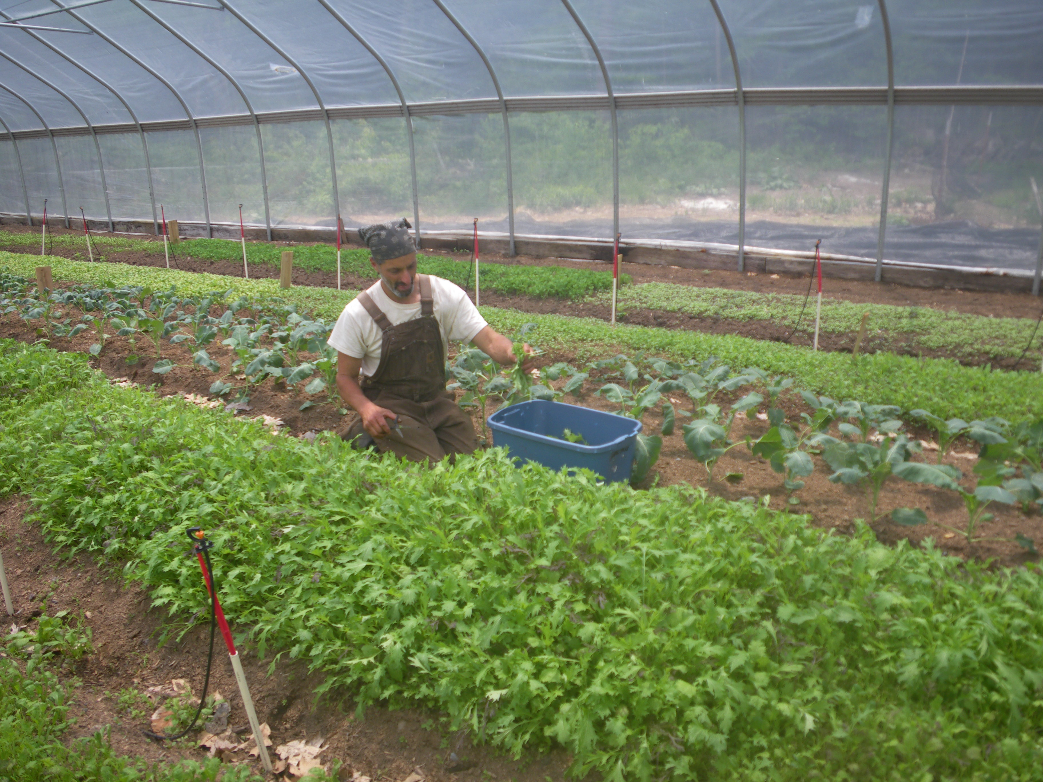 how are farmers growing more crops Increased consumption of healthy foods would lead us farmers to grow more of  these foods and less of the commodity crops that currently dominate us.